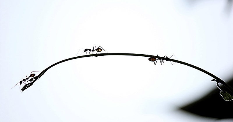 How do Ants Survive Falls From Great Heights