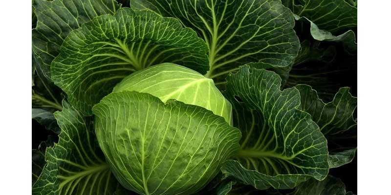 Cabbage   Zero Calorie Foods
