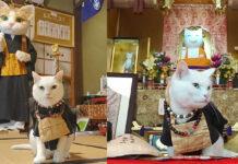 Cat Temple Japan