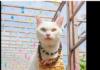 cat temple in Japan
