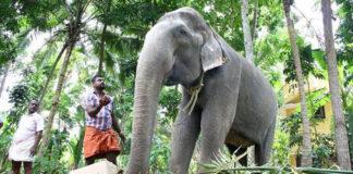 World's Oldest Living tusker Dakshayani