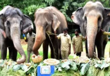 Gland Pharma Adopts 27 Zoo Animals