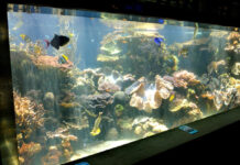 Fish Tank | How to Clean Fish Tank