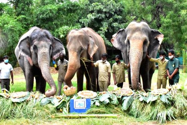 Hyderabad   Hyderabad zoo animals