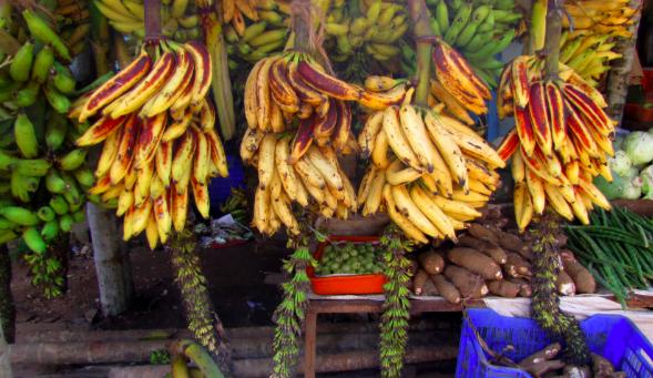 Changalikodan Banana | Kerala's export to Europe