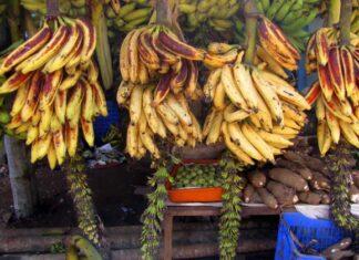 Chengalikodan banana