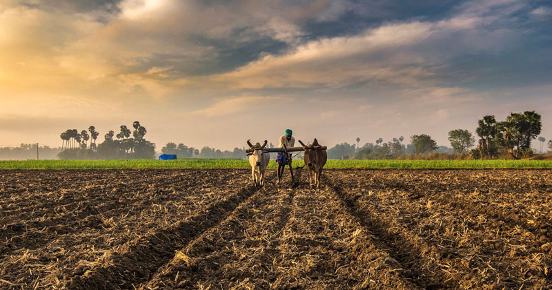 Farmer Sowing His Field | Indian Films on Farmers