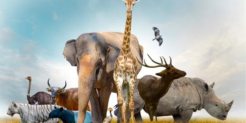 Oldest Animal Species on Earth