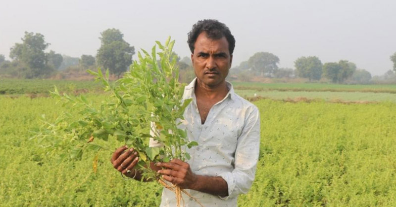 Indore Farmers