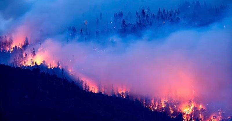 Bandhav Garh Forest Fire