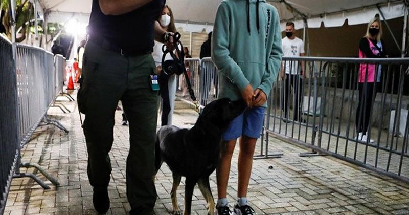 Covid 19 Sniffer Dogs Switzerland