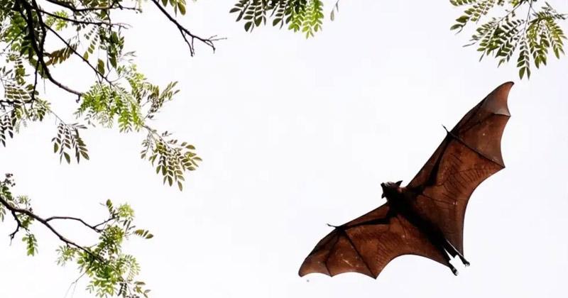 Bats in Switzerland