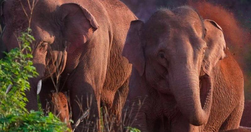 Elephants Travel 400Km Across China